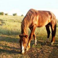 Лошадь, природы созданье чудесное... :: Людмила Богданова (Скачко)