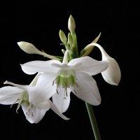 цветок :: Александр ***