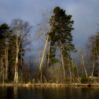 Утро на озере...... :: Юрий Цыплятников