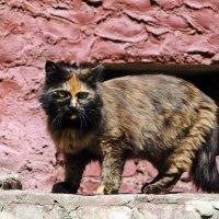 Вышла кошка из подвала. :: Лариса Вишневская