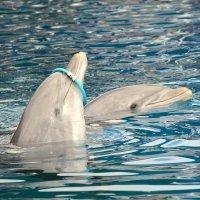 Дельфины :: Валентина Коряченцева