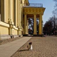 хозяйка Петропавловской крепости - кошка Капа :: Елена