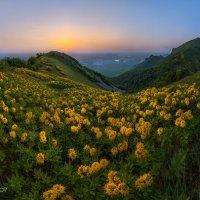Цветущие горы на заре :: Фёдор. Лашков