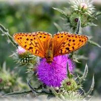 Нектар лета :: Nina Karyuk