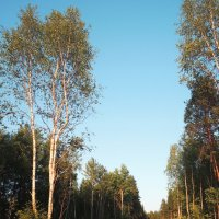 просто лес :: Элен Шендо