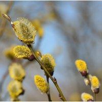 Запах Весны. :: Paparazzi