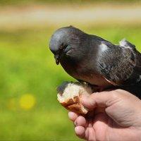ручной :: linnud