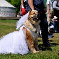 Завидная невеста :: Владимир Куликов
