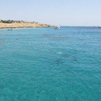О чём мечтают те,кто живёт у моря? :: tgtyjdrf