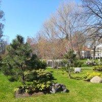 Японский сад в таллинском Кадриорге :: veera (veerra)