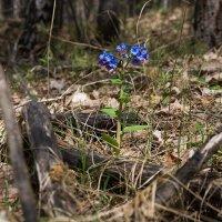 весна в лесу! :: Elena Wise