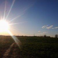Майское солнце. :: Светлана Громова