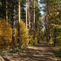 Дорога в осенний лес :: Татьяна Георгиевна