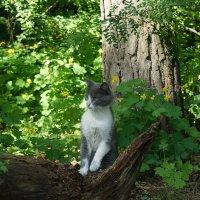 Лесной кот :: nika555nika Ирина