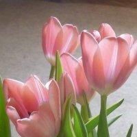 Весна...дома. :: Татьяна Юрасова