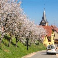 По винной дороге Эльзаса... :: Наталия