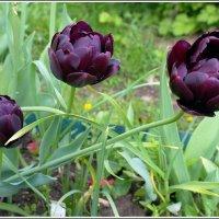 июнь в саду :: muh5257