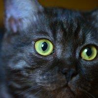 Эти глаза напротив :: Тамара Бедай