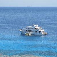Египет, Красное море :: tgtyjdrf