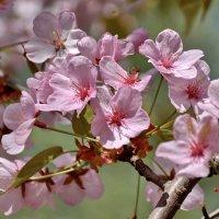 Весны прекрасные моменты :: Ирина Ярцева