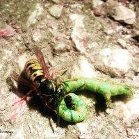 Жизнь и смерть насекомых... :: Сергей Леонтьев