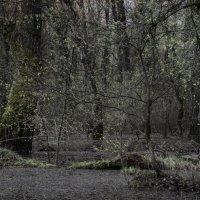 Flood forest. :: Андрий Майковский