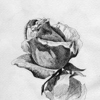Роза. :: Anna Gornostayeva