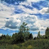 Под небом июня.. :: Андрей Заломленков