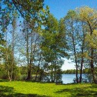 Майский день на северо-западе (1) :: Виталий