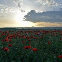 Май в Крыму :: Геннадий Ячменев