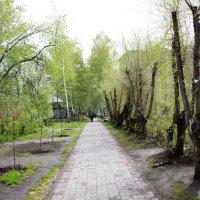 Тротуар :: Олег Афанасьевич Сергеев