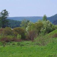 Весна цветущая. :: Вера Литвинова