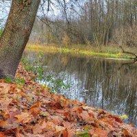 Запах листвы :: Константин