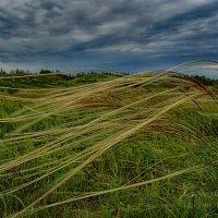 Мелодия ветра :: Сергей Шаталов