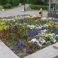 Много цветов сразу :: Андрей Lactarius