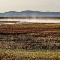 туман над болотам :: Георгий А