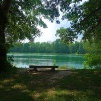 Июнь в зелёном... :: Galina Dzubina