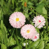 Июньские первоцветы. :: Любовь