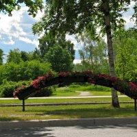 Цветочная арка на Светлановском проспекте :: максим лыков