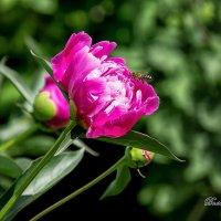 цветы :: Галина Волченкова