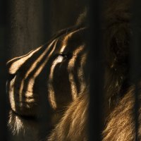 зоопарк :: Алексей Руднев
