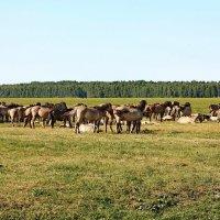 Национальный парк Кемери, Латвия. :: Liudmila LLF