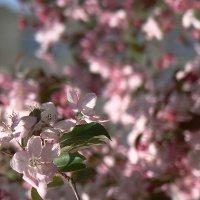 """""""... майский день... именины сердца..."""" :: Syntaxist (Светлана)"""