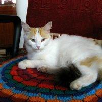 Кошки :: Slav51T