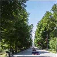 Утром в парке :: Владимир Стаценко