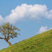Гляжу, поднимается медленно в гору :: slavado