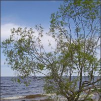 Ива на берегу озера :: lady v.ekaterina
