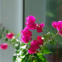 Мой скромный цветочек ) :: Ирина