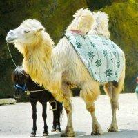 Транспорт всякий-разный :: Алла Захарова