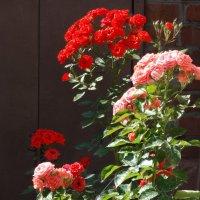 Июнь,утро,розовое изобилие... :: Тамара (st.tamara)